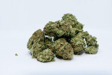 marihuana w bolesławcu